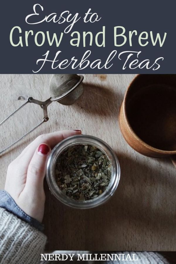 Easy to Grow and Brew Herbal Teas - Growing, drying and preparing your own tea blends with herbs and fruits grown from your very own garden is one of the most rewarding experiences in life. Tea calms, it relaxes, it heals and it refreshes. Whether you take it hot in a cup or cold in a glass, preparing it to suit your fancy is what it is all about.