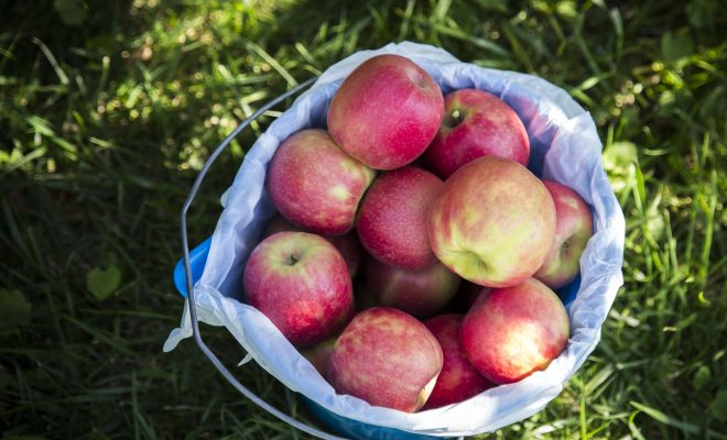 Apple picking fall bucket list for couples