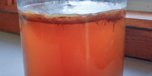 How to Make Your Own Kombucha Tea in 3 Easy Steps