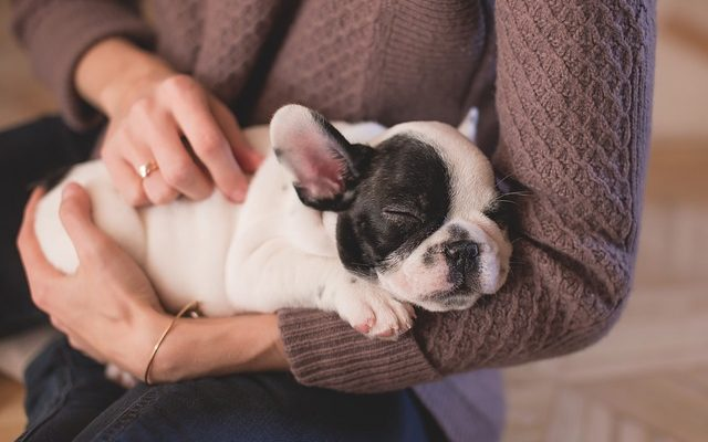 The Health Benefits Of A Family Pet
