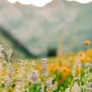 The Importance of Practicing Gratefulness During Times of Uncertainty
